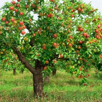 The Blessing of Fruitfulness